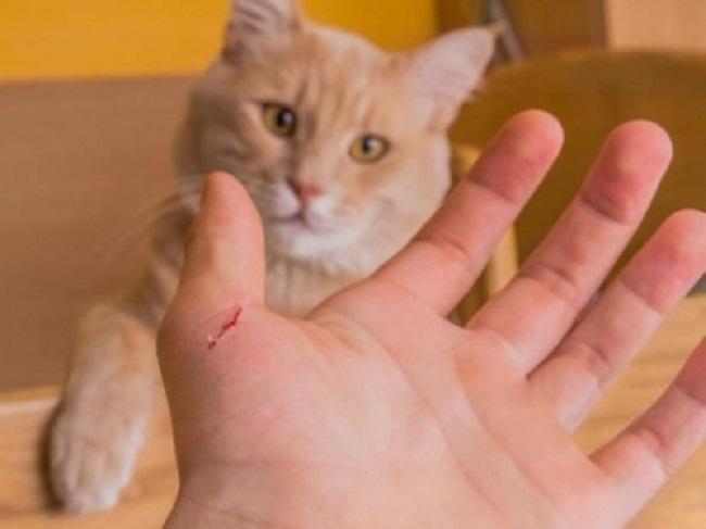 Bị mèo cắn chảy máu có sao không?