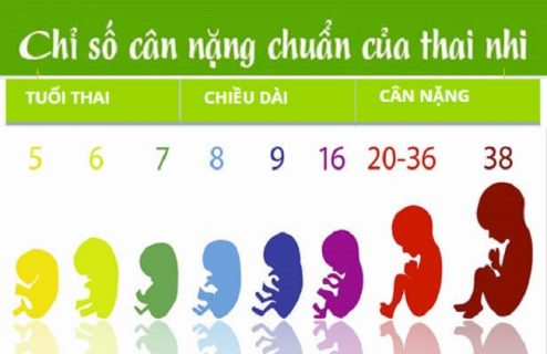 Trọng lượng thai nhi theo tuần tuổi như thế nào?