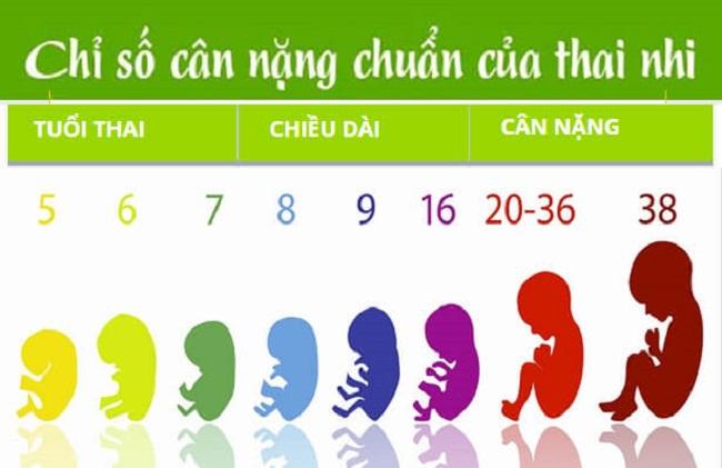 Chỉ số cân nặng chuẩn của thai nhi1