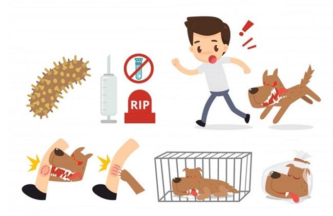 Chó bị dại sống được bao lâu?