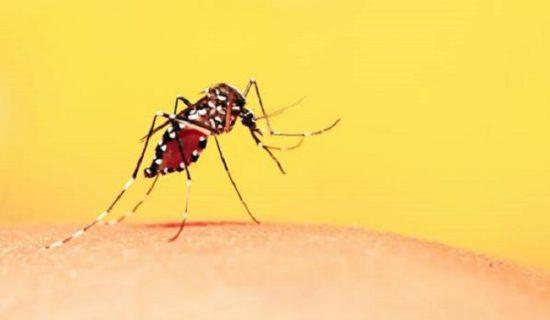 Nguyên nhân gây sốt xuất huyết và sốt rét?